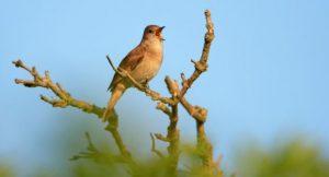 Bird singing on a branch